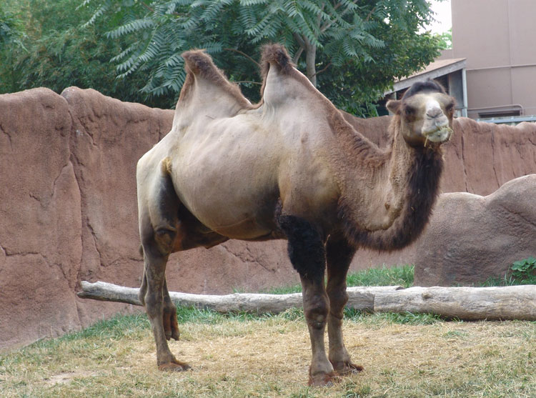 What Kind Of Camel Is Your Story