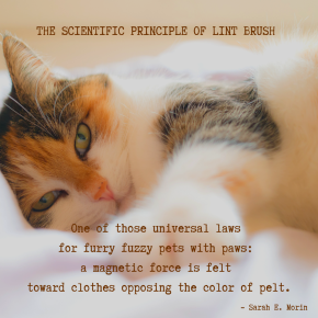 The Scientific Principle of Lint Brush